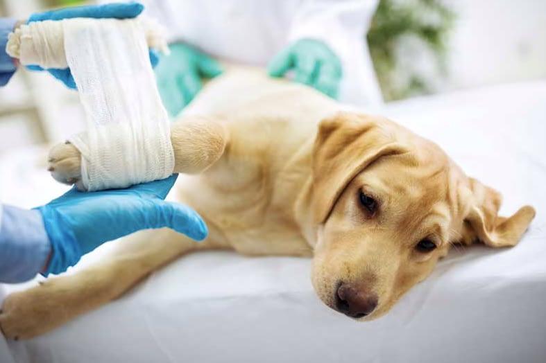 Βρήκατε Ένα Τραυματισμένο Σκύλο Ή Γάτα; Πώς Να Το Βοηθήσετε