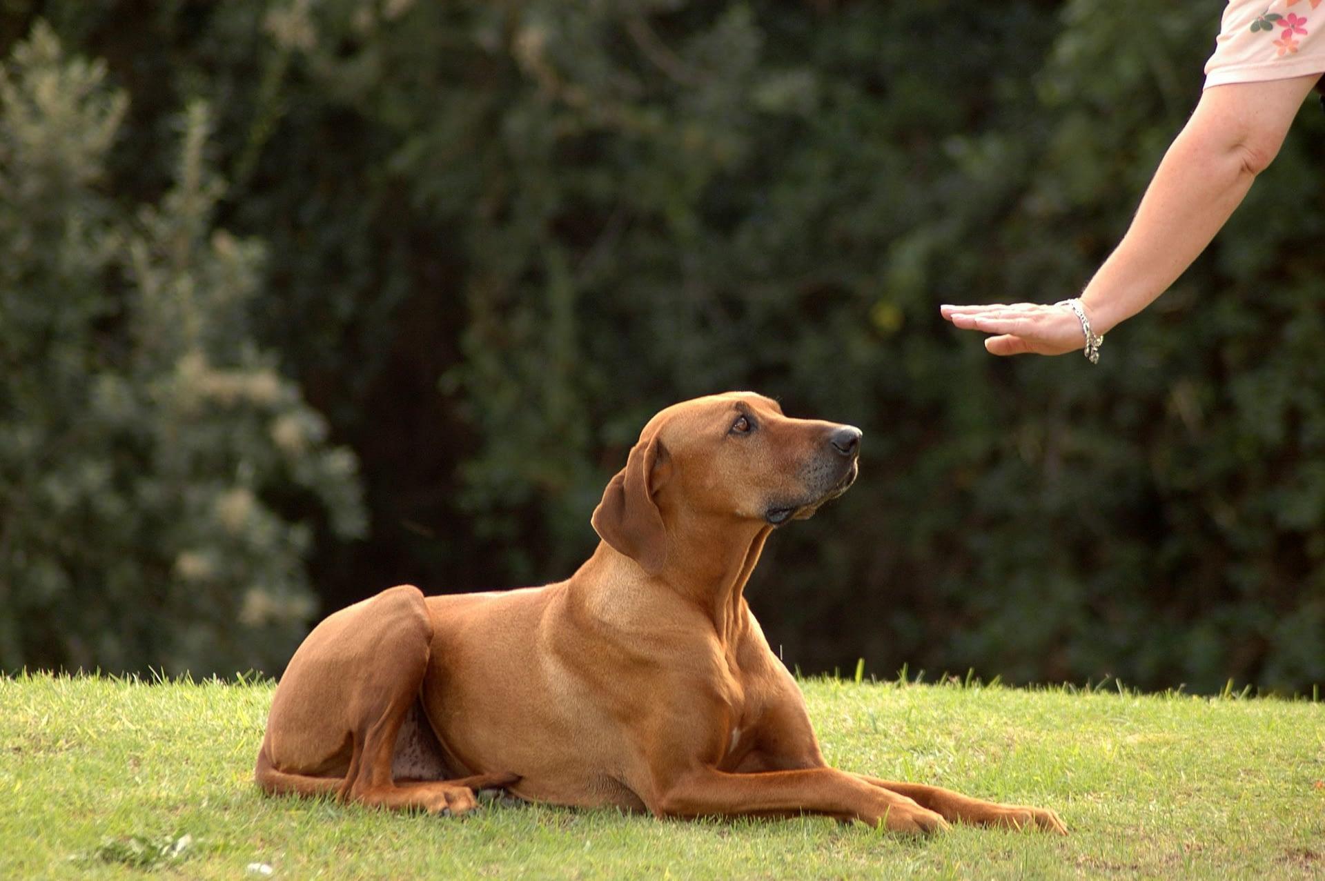 Όλοι Οι Τρόποι Να Μιλήσετε Στη Γλώσσα Του Σκύλου Σας